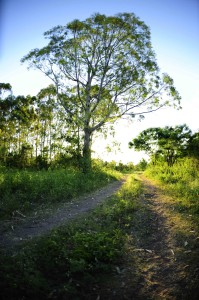 A path to nowhere in the fields of Mr F's land*