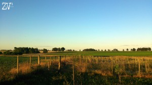 Countryside near the town of Trinidad, Uruguat