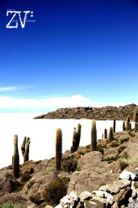 An Island of Giant Cacti - a great setting for a horror movie maybe..*